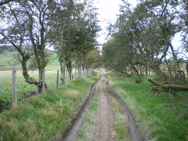 Trees and country path